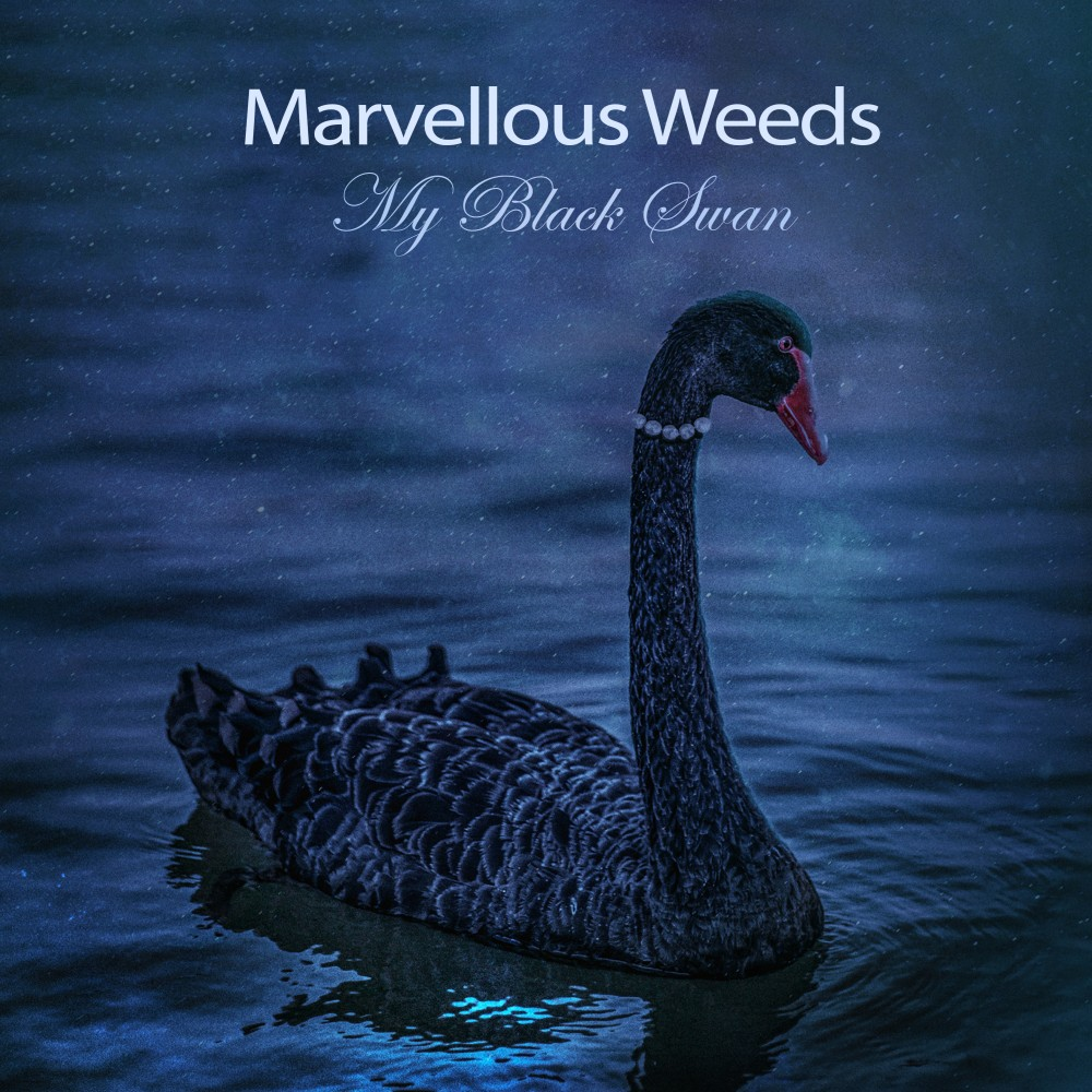 Marvellous Weeds - My Black Swan album cover image
