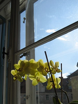 Orchids and blue sky